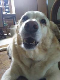Dog_mocha