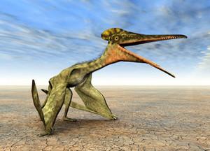 Pterodactylus_l