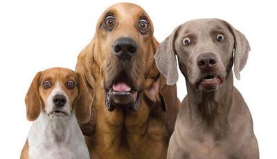 Shock_dog